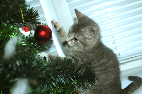 christmas tree kitten - Christmas Names For Cats